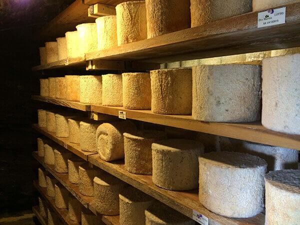 Feiner Piemont Käse